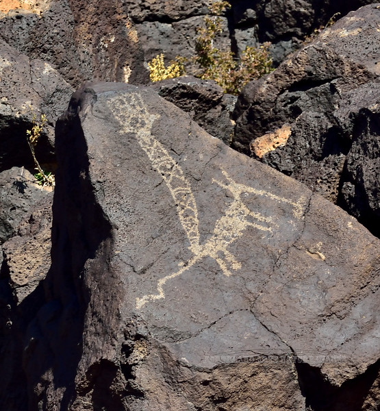 NM-PNM-PMT 2019.11.12#1616.2. Petroglphs. Piedras Marcadas Trail, Petroglyph Nat. Mon., New Mexico. 1300 A.D. to 1650 A.D. evidence from 9000 to 12000 years ago. up to spanish Colonial period.