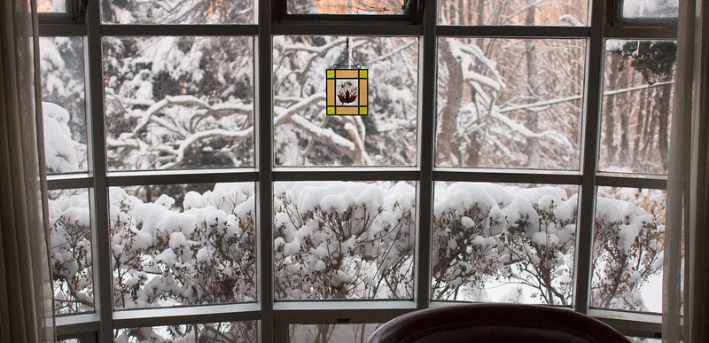 Snow on azaleas out living room window - March 6, 2015