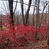 Rock Hill Rd Fire Bush-4950-Edit