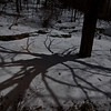 19 Rock Hill Rd - Bedford, NY - Shadow of sugar maple in full moon 1/29/2010