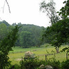 entering into Rockefeller Lands - large cow pastures beneath Buttermilk Hill