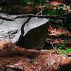Enveloped Rock