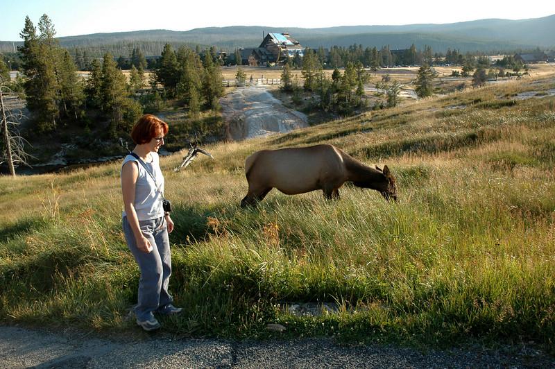 Upper Geyser Basin, Yellowstone NP