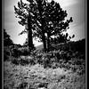 Estes Park, Rocky Mountain National Park, Colorado 2013