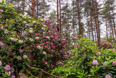 Rhododendron Park – Alppiruusupuisto #22