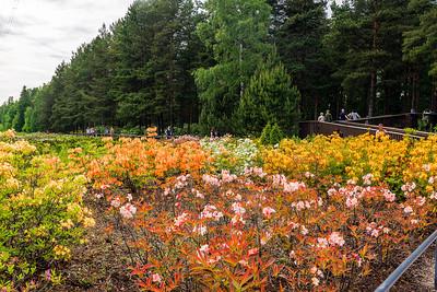 Rhododendron Park – Alppiruusupuisto #15