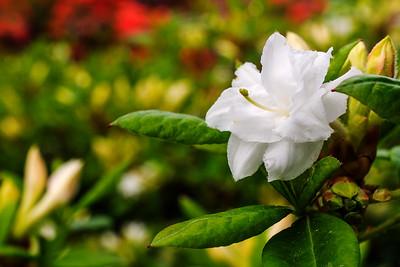 Rhododendron Park – Alppiruusupuisto #1