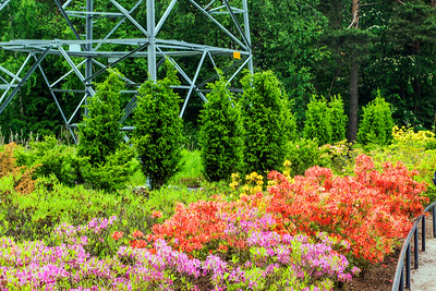 Rhododendron Park – Alppiruusupuisto #42