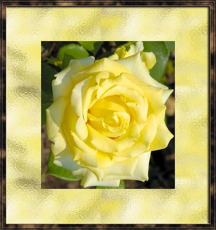 Rose Garden Two