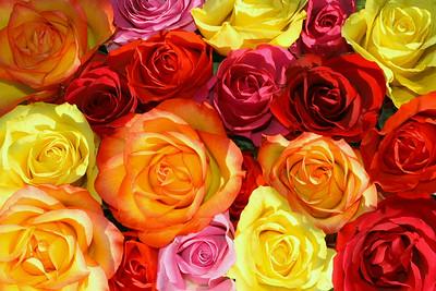 roses & more II