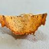 Maple Spanworm, Ennomos magnaria, Guenée, [1858]<br /> <br /> 200350 – 6797