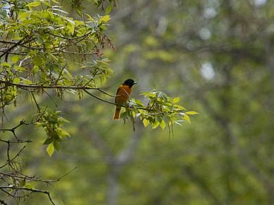 Rouge Valley Bird Walk