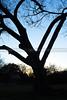 RoundRock-Texas-7142