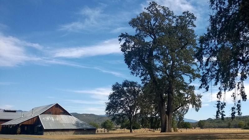 Henley Oak
