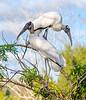 Stork Stack