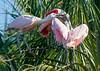 Roseate Spoonbill Nest