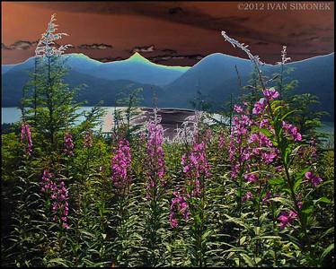 """SOLARIZED FIREWEED"",Wrangell,Alaska,USA."