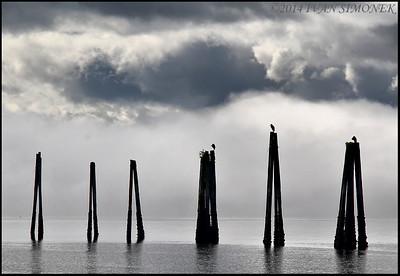 """PILINGS WITH THREE HERONS"",Wrangell,Alaska,USA."