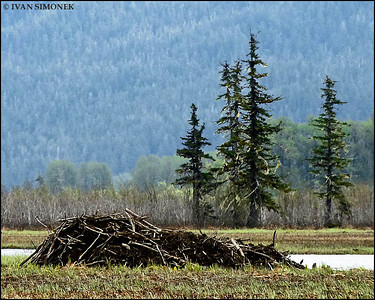 """BEAVER COUNTRY"",Stikine river,Alaska,USA."