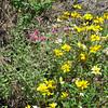 Wildflowers_ Portal AZ 9-09