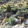Scenics_Cave Creek AZ 9-09