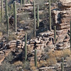 2017_ Sabino Canyon landscape_ AZ_April_IMG_7399
