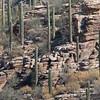 2017_ Sabino Canyon landscape_ AZ_April_IMG_7399