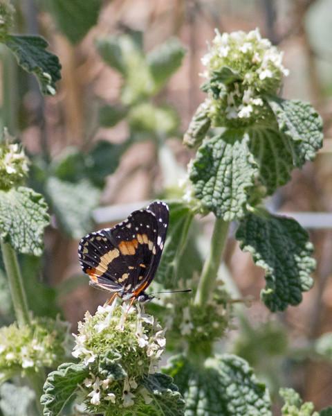 2017_ bordered patch_Ramsey Canyon_AZ_ April_IMG_7104