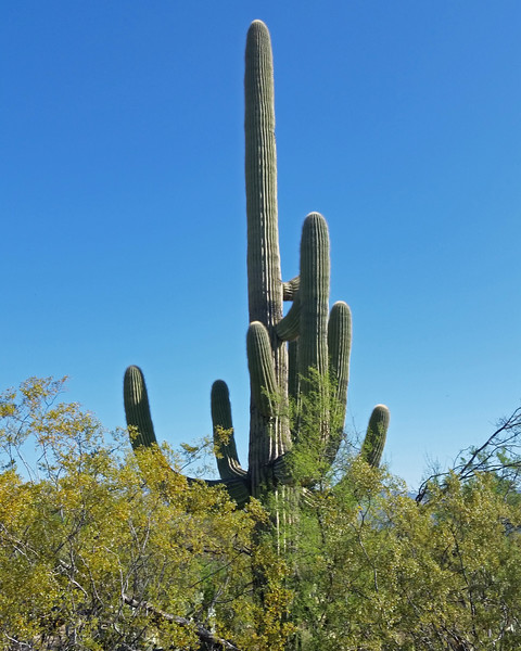 2017_ Saguaro Natl Park_ April_20170420_081601