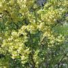 2017_ desert blooms_ Sabino Canyon_AZ_20170419_102627