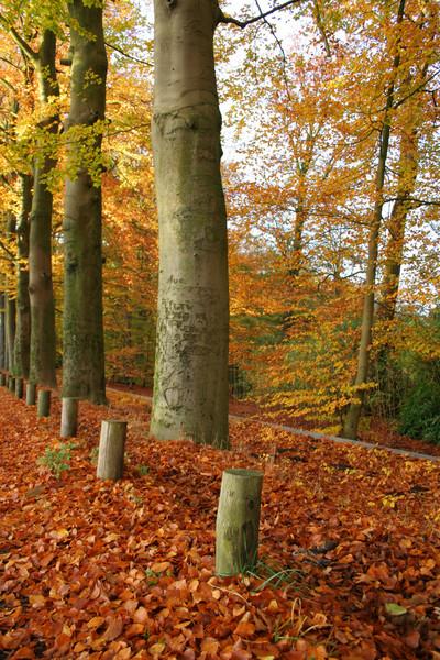 autumn colours colors trees