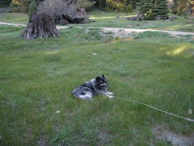Bela amongst the greenery. Good dog!