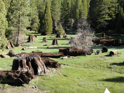 Stump Meadow.