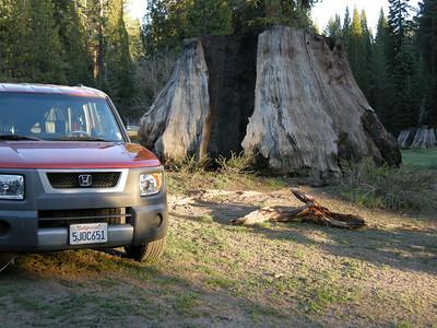 Element dwarfed by roadside Giant Sequoia stump.