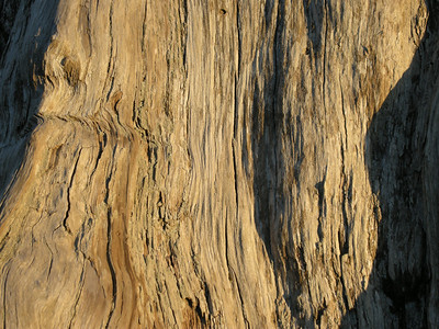 Texture of old stump in evening light.