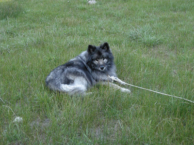 Bela. He's a Keeshond that we rescued, and was born in 1996 (therefore was 12 when this photo was taken.)