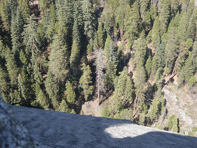 Looking down on trees to the east of Moro Rock. An excellent short trail, with handrails, goes from the Crescent Meadow road to the top of this dome.
