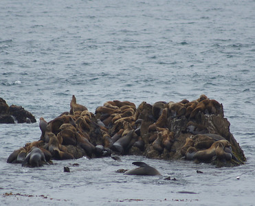 SF Monterey 2012