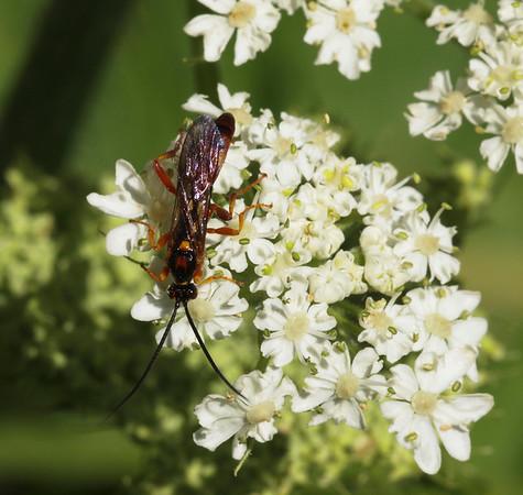 SF State Entomology Class