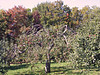 KINGSTON PENINSULA -  GORHAM'S BLUFF - Bostwick apple orchards