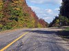 KINGSTON PENINSULA -  Leaves are red - Road is full of leaves.