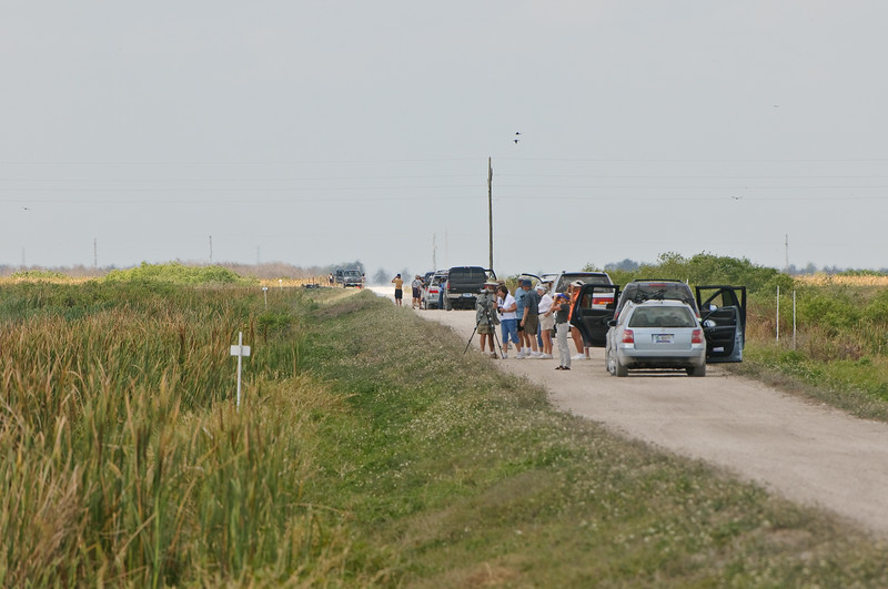 We went to STA5 associated with a birding outing.  They asked photographers to arrive early, and we just wandered.  The main group was quite a collection, maybe 50 or so people in a 15-20 cars.  While this looks crowded, it was taken at 400mm and this road (of many) fades in the distance -- hundreds could be lost in the size of this place.