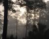 Corkscrew morning fog