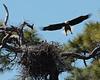 Eagle landing Ft DeSoto