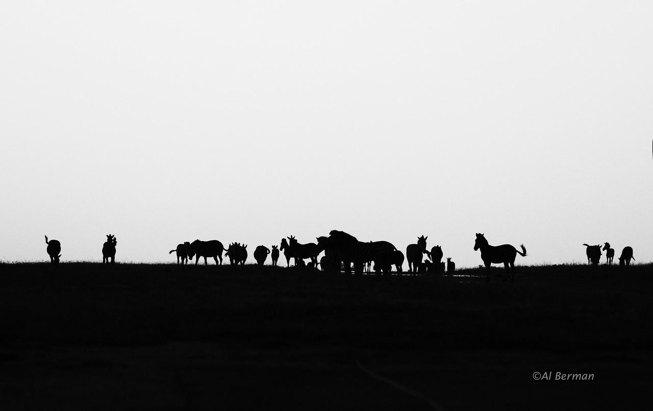 Wildlife at end of airstrip at dusk