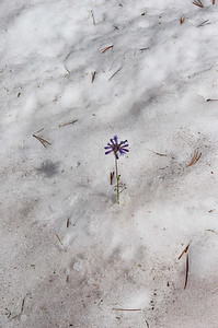 ... and a little wildflower finding its way through the snow ... ok... actually Shawn set this picture up for me.  LOL  It didn't turn out as cool as I thought it would.