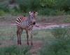 2013-01-Safari-1208