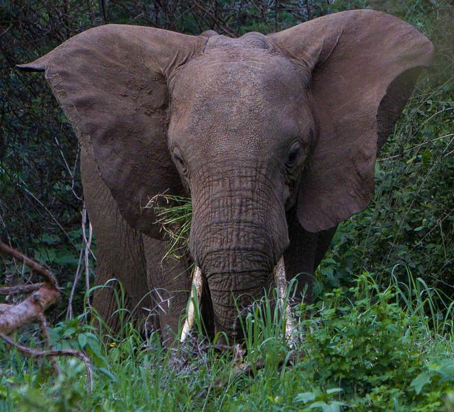 2013-01-Safari-0868