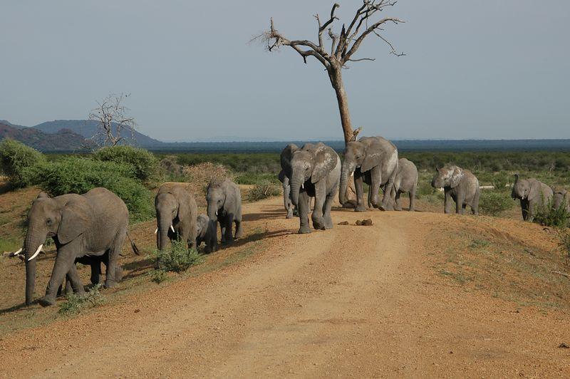 elephant parade 3