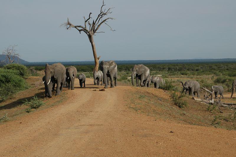 elephant parade 2